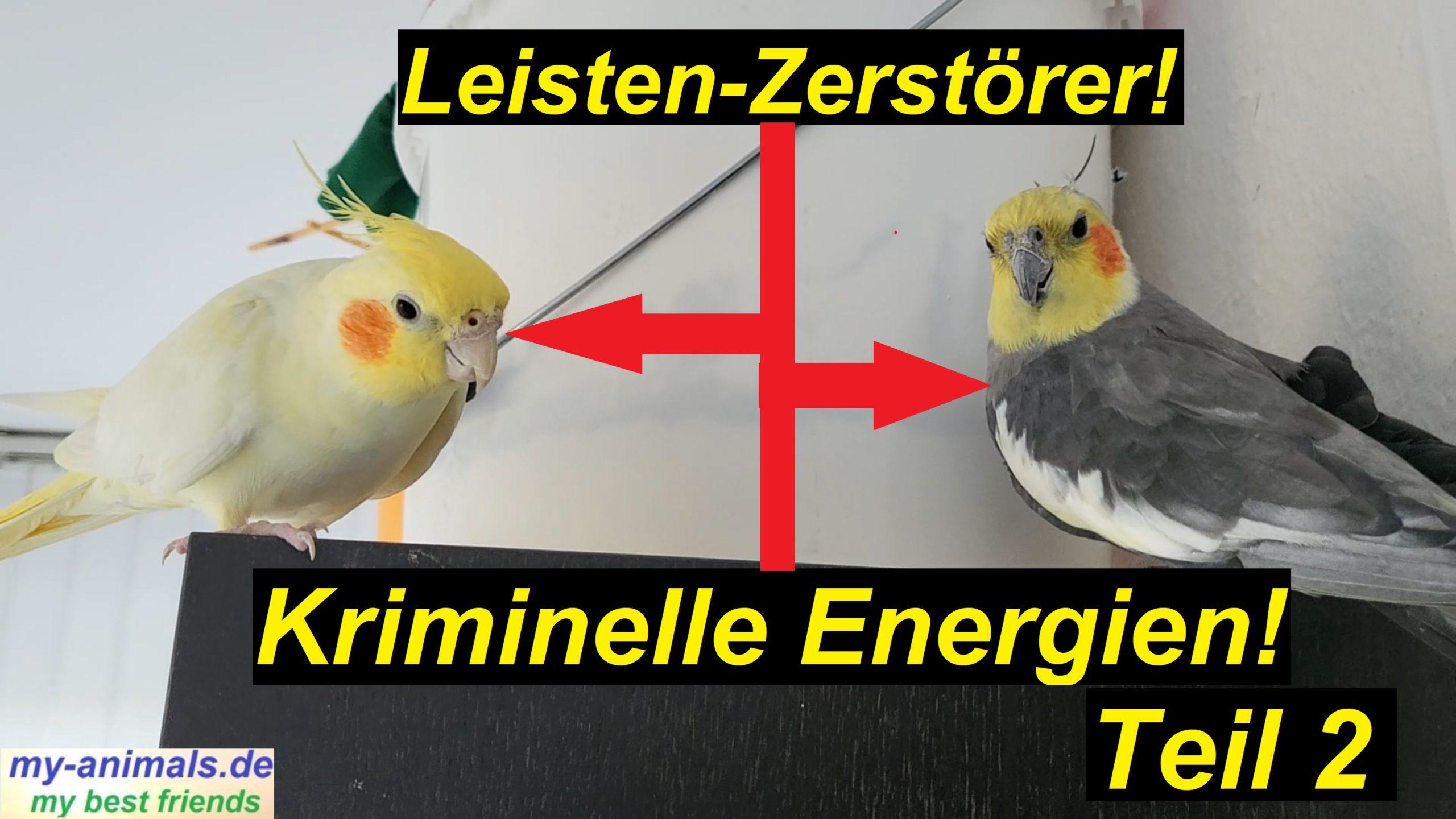 Teil 2: Leisten-Zerstörer. 2 kriminelle Nymphensittiche!